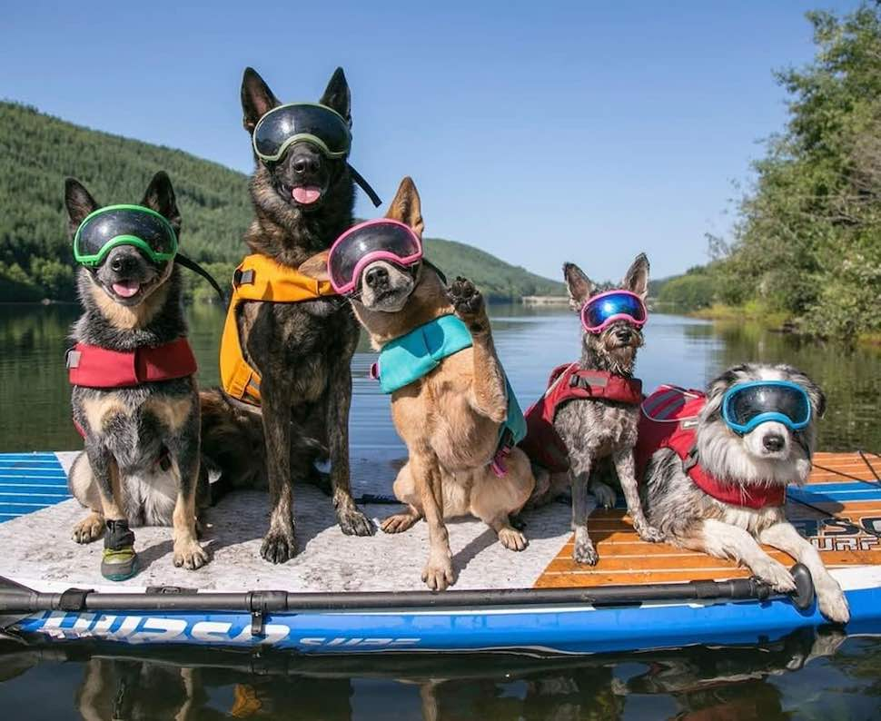 Group of dogs sitting on Thurso Surf Max multi-purpose SUP